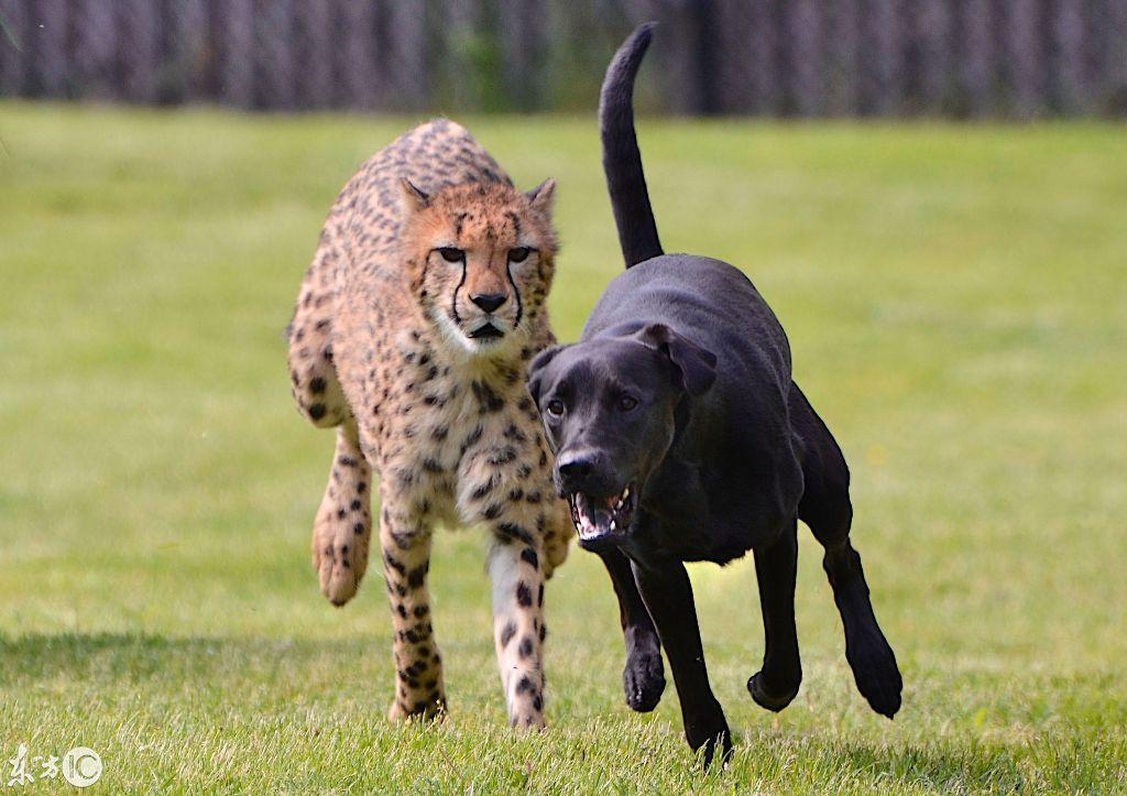 7. 猎豹:我就在你后面.(演什麼鬼片图片